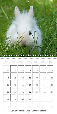 Sweet Bunny (Wall Calendar 2019 300 × 300 mm Square) - Produktdetailbild 1