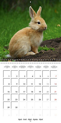 Sweet Bunny (Wall Calendar 2019 300 × 300 mm Square) - Produktdetailbild 4