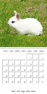 Sweet Bunny (Wall Calendar 2019 300 × 300 mm Square) - Produktdetailbild 3