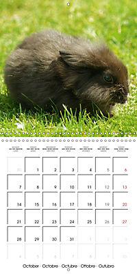 Sweet Bunny (Wall Calendar 2019 300 × 300 mm Square) - Produktdetailbild 10