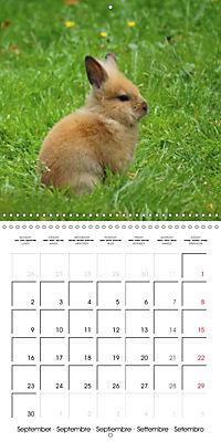Sweet Bunny (Wall Calendar 2019 300 × 300 mm Square) - Produktdetailbild 9