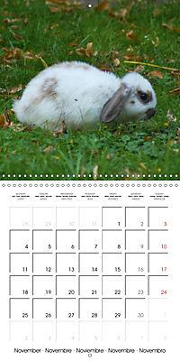 Sweet Bunny (Wall Calendar 2019 300 × 300 mm Square) - Produktdetailbild 11