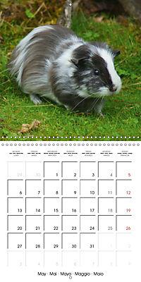 Sweet Guinea Pig (Wall Calendar 2019 300 × 300 mm Square) - Produktdetailbild 5