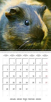 Sweet Guinea Pig (Wall Calendar 2019 300 × 300 mm Square) - Produktdetailbild 1