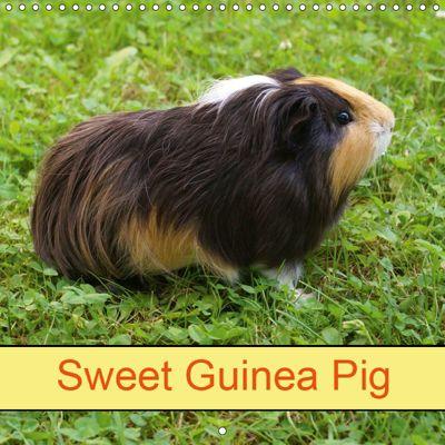 Sweet Guinea Pig (Wall Calendar 2019 300 × 300 mm Square), kattobello