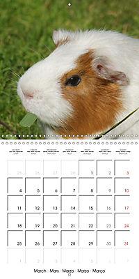 Sweet Guinea Pig (Wall Calendar 2019 300 × 300 mm Square) - Produktdetailbild 3