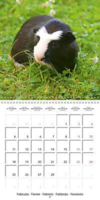 Sweet Guinea Pig (Wall Calendar 2019 300 × 300 mm Square) - Produktdetailbild 2
