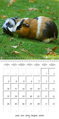 Sweet Guinea Pig (Wall Calendar 2019 300 × 300 mm Square) - Produktdetailbild 6