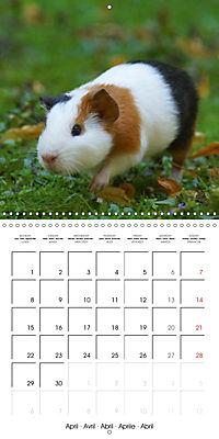 Sweet Guinea Pig (Wall Calendar 2019 300 × 300 mm Square) - Produktdetailbild 4