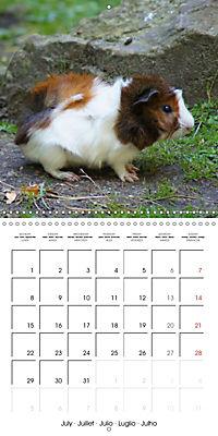 Sweet Guinea Pig (Wall Calendar 2019 300 × 300 mm Square) - Produktdetailbild 7