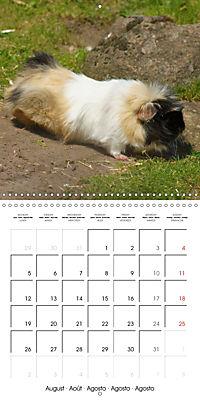 Sweet Guinea Pig (Wall Calendar 2019 300 × 300 mm Square) - Produktdetailbild 8