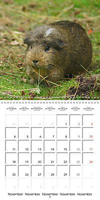 Sweet Guinea Pig (Wall Calendar 2019 300 × 300 mm Square) - Produktdetailbild 11