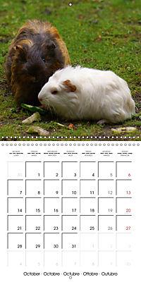 Sweet Guinea Pig (Wall Calendar 2019 300 × 300 mm Square) - Produktdetailbild 10