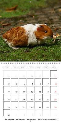 Sweet Guinea Pig (Wall Calendar 2019 300 × 300 mm Square) - Produktdetailbild 9