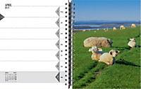 Sylt - die Insel 2019 Tischkalender - Produktdetailbild 7