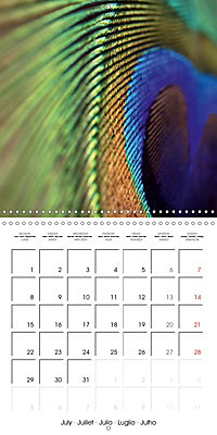 Symbol of beauty (Wall Calendar 2019 300 × 300 mm Square) - Produktdetailbild 7