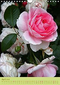 Symphony of Roses (Wall Calendar 2019 DIN A4 Portrait) - Produktdetailbild 4