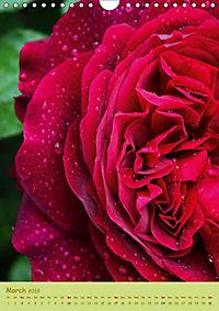 Symphony of Roses (Wall Calendar 2019 DIN A4 Portrait) - Produktdetailbild 3