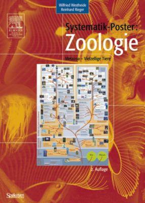Systematik-Poster: Zoologie (Metazoa - Vielzellige Tiere), Wilfried Westheide, Reinhard M. Rieger
