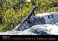 Table Mountain One of the Seven Wonders of Nature (Wall Calendar 2019 DIN A4 Landscape) - Produktdetailbild 10