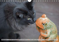 Taffe Begegnungen-Drei Waldkatzen auf Abenteuerreisen (Wandkalender 2019 DIN A4 quer) - Produktdetailbild 1