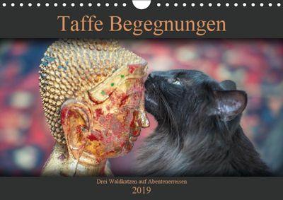 Taffe Begegnungen-Drei Waldkatzen auf Abenteuerreisen (Wandkalender 2019 DIN A4 quer), Viktor Gross
