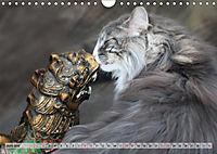 Taffe Begegnungen-Drei Waldkatzen auf Abenteuerreisen (Wandkalender 2019 DIN A4 quer) - Produktdetailbild 6