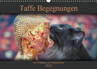 Taffe Begegnungen-Drei Waldkatzen auf Abenteuerreisen (Wandkalender 2019 DIN A3 quer), Viktor Gross