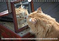 Taffe Begegnungen-Drei Waldkatzen auf Abenteuerreisen (Wandkalender 2019 DIN A4 quer) - Produktdetailbild 7