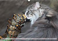 Taffe Begegnungen-Drei Waldkatzen auf Abenteuerreisen (Wandkalender 2019 DIN A3 quer) - Produktdetailbild 6