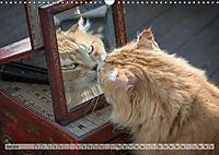 Taffe Begegnungen-Drei Waldkatzen auf Abenteuerreisen (Wandkalender 2019 DIN A3 quer) - Produktdetailbild 7
