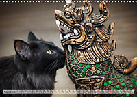 Taffe Begegnungen-Drei Waldkatzen auf Abenteuerreisen (Wandkalender 2019 DIN A3 quer) - Produktdetailbild 8