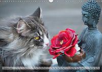 Taffe Begegnungen-Drei Waldkatzen auf Abenteuerreisen (Wandkalender 2019 DIN A3 quer) - Produktdetailbild 10