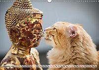 Taffe Begegnungen-Drei Waldkatzen auf Abenteuerreisen (Wandkalender 2019 DIN A3 quer) - Produktdetailbild 12