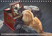 Taffe Begegnungen-Drei Waldkatzen auf Abenteuerreisen (Tischkalender 2019 DIN A5 quer) - Produktdetailbild 2