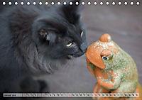Taffe Begegnungen-Drei Waldkatzen auf Abenteuerreisen (Tischkalender 2019 DIN A5 quer) - Produktdetailbild 1