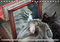 Taffe Begegnungen-Drei Waldkatzen auf Abenteuerreisen (Tischkalender 2019 DIN A5 quer) - Produktdetailbild 4