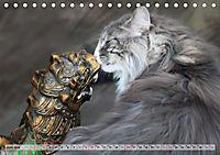 Taffe Begegnungen-Drei Waldkatzen auf Abenteuerreisen (Tischkalender 2019 DIN A5 quer) - Produktdetailbild 6