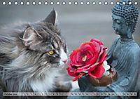 Taffe Begegnungen-Drei Waldkatzen auf Abenteuerreisen (Tischkalender 2019 DIN A5 quer) - Produktdetailbild 10