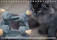 Taffe Begegnungen-Drei Waldkatzen auf Abenteuerreisen (Tischkalender 2019 DIN A5 quer) - Produktdetailbild 9