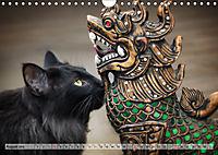 Taffe Begegnungen-Drei Waldkatzen auf Abenteuerreisen (Wandkalender 2019 DIN A4 quer) - Produktdetailbild 8