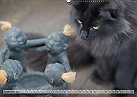 Taffe Begegnungen-Drei Waldkatzen auf Abenteuerreisen (Wandkalender 2019 DIN A2 quer) - Produktdetailbild 9