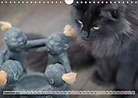 Taffe Begegnungen-Drei Waldkatzen auf Abenteuerreisen (Wandkalender 2019 DIN A4 quer) - Produktdetailbild 9