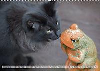 Taffe Begegnungen-Drei Waldkatzen auf Abenteuerreisen (Wandkalender 2019 DIN A2 quer) - Produktdetailbild 1