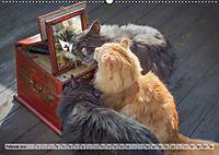 Taffe Begegnungen-Drei Waldkatzen auf Abenteuerreisen (Wandkalender 2019 DIN A2 quer) - Produktdetailbild 2