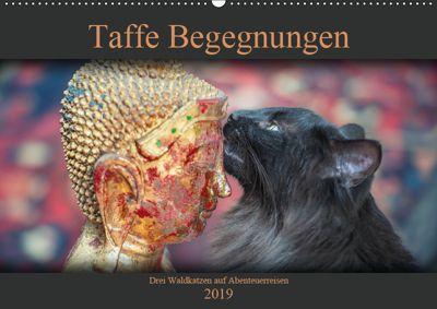 Taffe Begegnungen-Drei Waldkatzen auf Abenteuerreisen (Wandkalender 2019 DIN A2 quer), Viktor Gross