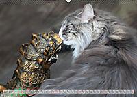 Taffe Begegnungen-Drei Waldkatzen auf Abenteuerreisen (Wandkalender 2019 DIN A2 quer) - Produktdetailbild 6