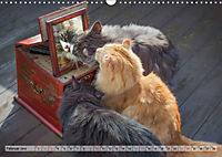 Taffe Begegnungen-Drei Waldkatzen auf Abenteuerreisen (Wandkalender 2019 DIN A3 quer) - Produktdetailbild 2