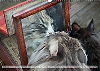 Taffe Begegnungen-Drei Waldkatzen auf Abenteuerreisen (Wandkalender 2019 DIN A3 quer) - Produktdetailbild 4