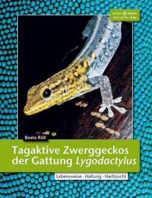 Tagaktive Zweggeckos der Gattung Lygodactylus - Beate Röll |